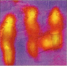 shopper in thermal view